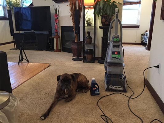 Carpet Cleaner  Hoover