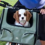 Dog Bicycle Carrier