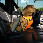 Dog Safety Harness 2