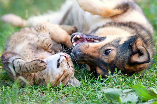 Pets Resting on the Grass Safe Lawn Fertilizers