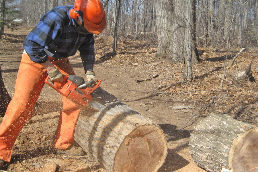 2019 Best Chain Saw Reviews - Top Rated Chain Saws